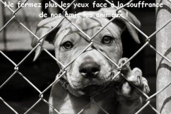 DE L'ABANDON A L'ADOPTION ET DE L'ADOPTION A L'ABONDON  essayez de comprendre combien un animal peut souffrir  MERCI