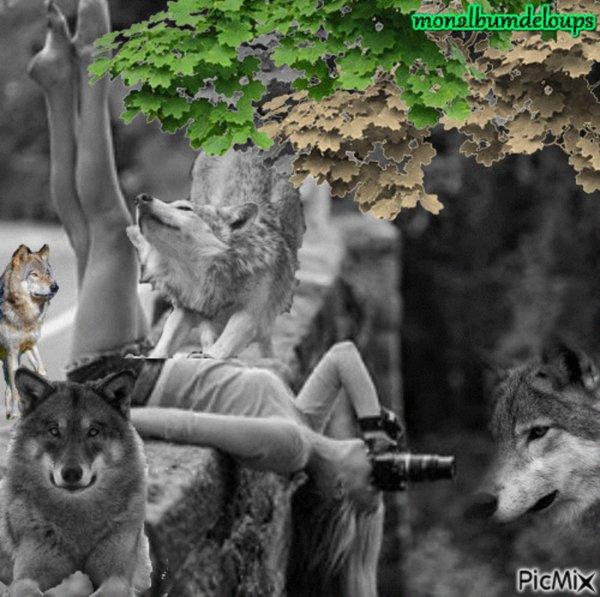 """L'histoire et les origines de l'husky sibérien """" le husky est né d'un amour entre un Loup et la Lune """""""