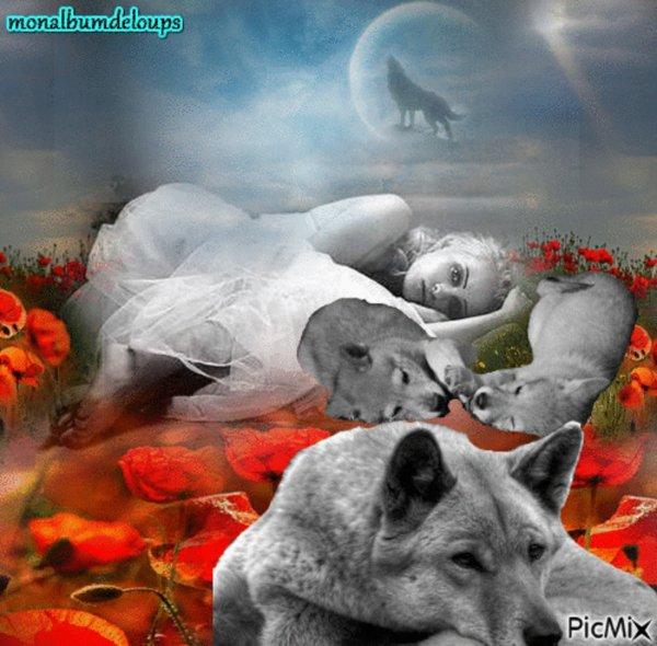 Loup ibérique Canis lupus signatus  sous-espèce du loup gris