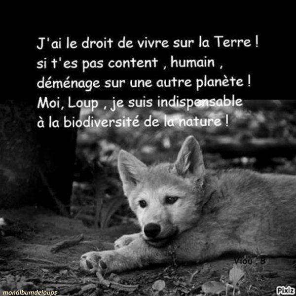 toute espèce animale, quelle qu'elle soit, a le droit de vivre et d'exister.  Ça ne devrait pas être contestable, criticable ou opposable.  Ça devrait être un fait, purement et simplement.  Le droit à la vie.