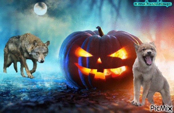 Nous approchons  halloween et la fête des morts un ptit article sur le loup est tout à fait adapter puisqu'il  a longtemps été associé à la mort dans les mythes du monde...