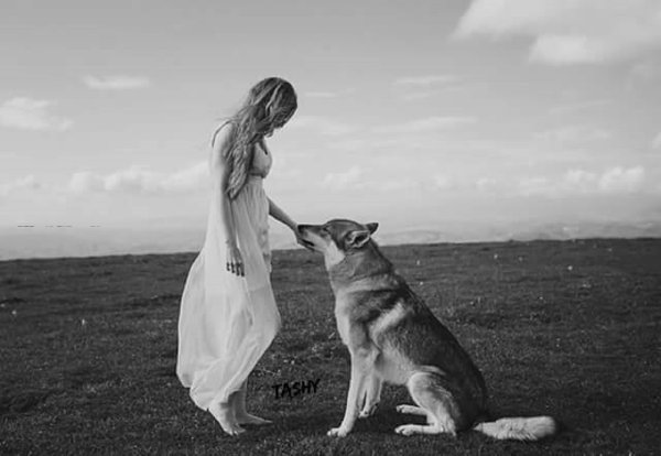 La légende du loup blanc