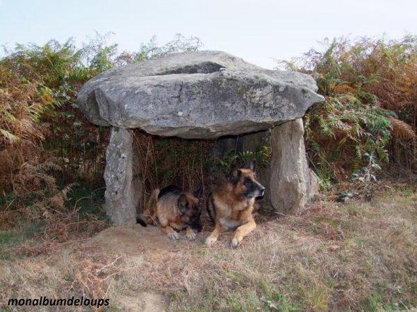 Le chien aurait vu le jour en Europe il y a plus de 18 000 ans