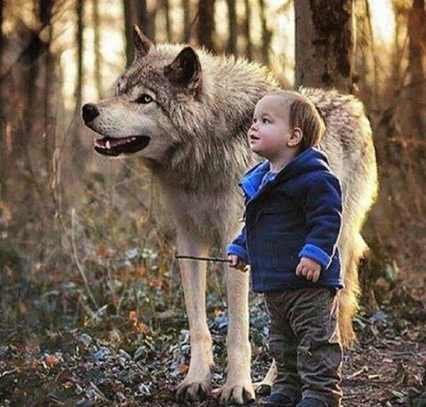 """Les loups, ours ou requins sont-ils des """"mangeurs d'hommes""""  suivie d'une vidéo sublime à regarder jusqu'au bout  imagine un monde qui accepte les loups et qui respecte la nature et son équilibre"""