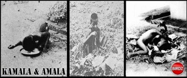 AMALA et KAMALA , les enfants sauvages