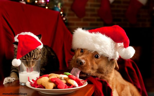 Chien ou chat, votre animal en hiver ...