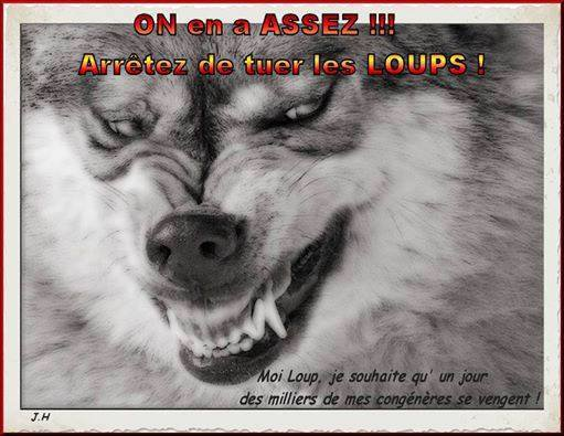 Les Pyrénées et Le loup