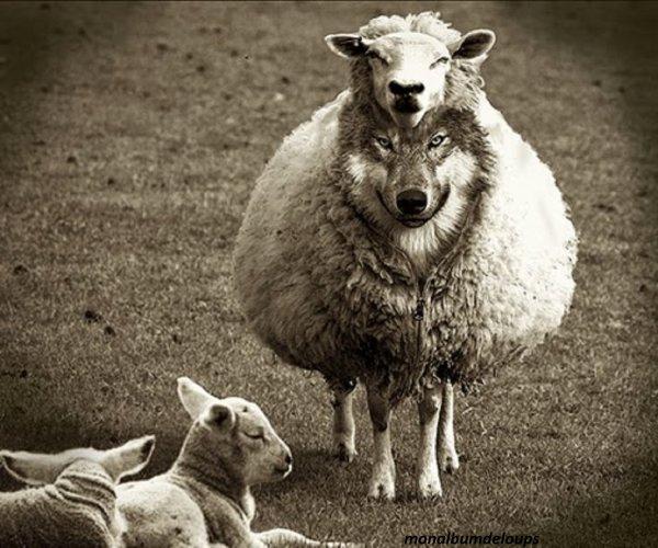 """""""Les bêtes sont ce que l'homme a le plus opprimé et le plus méconnu. Peut être, sont ils les détenteurs inconscients d'un secret sublime, que l'humanité aurait perdu et que leurs tristes regards couverts de ténèbres ne peuvent divulguer """"."""