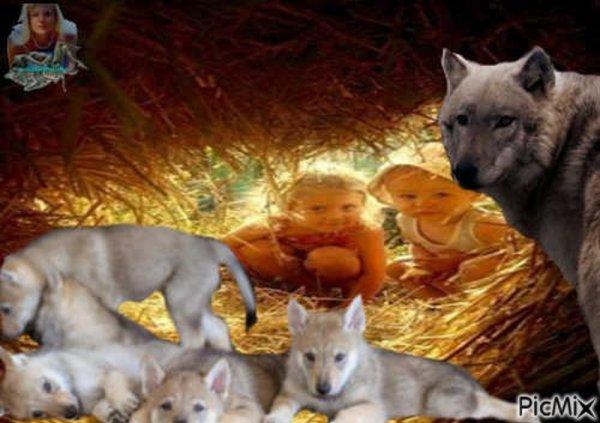 Les loups volent au secours de la chaîne alimentaire - Un loup envoie des textos - ET BIEN OUI  :)