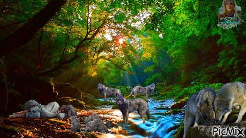 D'après une histoire vraie, L'île des loups raconte ce qui se passe quand l'équilibre délicat de la nature est rompu. Une famille de loups quitte l'île où elle vivait. Au début, ça ne change pas grand-chose. Mais maintenant qu'il n'ont plus de prédateur, les cerfs commencent à se multiplier. Finalement, ils deviennent si nombreux qu'il n'y a plus assez de nourriture pour tout le monde. Les autres espèces sont affectées à leur tour : souris, lapins, écureuils, renards, chouettes commencent aussi à souffrir de la famine. Seul le retour accidentel des loups sur l'île permettra à la nature de soigner lentement ses blessures.