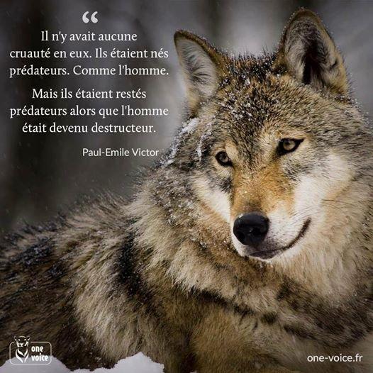 A DIFFUSER, PARTAGER OU CE QUE VOUS VOULEZ  si vous ne pouvez y aller faite au moins le geste de transmettre  merci à tous pour nos qui pour eux les heures sont comptées donc votre espèrance de vie aussi ainsi que notre biodiversité !!!!!
