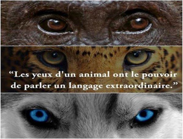 LES SENS D'UN ANIMAL :