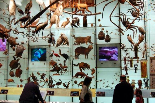 Impact des maladies infectieuses sur la biodiversité :  La crise d'extinction de la biodiversité est expliquée dans la grande majorité des cas par les cinq principales menaces que sont la fragmentation des habitats, les invasions biologiques, la surexploitation des ressources, la pollution et le réchauffement climatique.