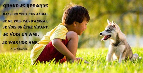 Les animaux ont-ils une conscience ??? Aujourd'hui, enfin nous savons qu'ils ont plus en commun avec nous que nous les pensions, et c'est aussi pour cela que notre comportement à leurs égards doit changer. On a tous notre propre rapport au monde animal, à vous de décider quelle degrés de conscience vous préférez lire chez votre animal de compagnie…