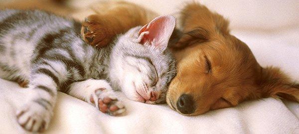 Réussir la cohabitation entre vos animaux de compagnie