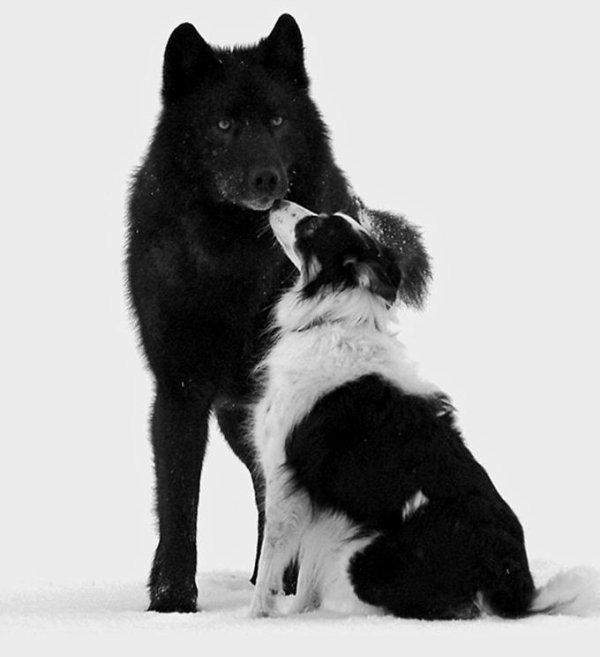15 choses que vous ne savez pas sur les chiens