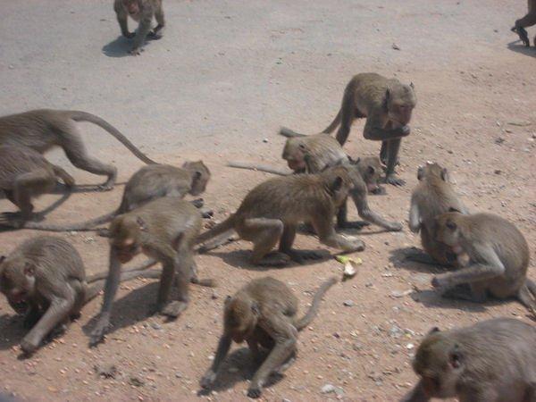"""Allons nous vers la """"planête des singes"""" ??? :)   Invasion de singes  Depuis quelque temps, nous assistons à des raids organisés par des singes dans différents pays du monde. :)"""