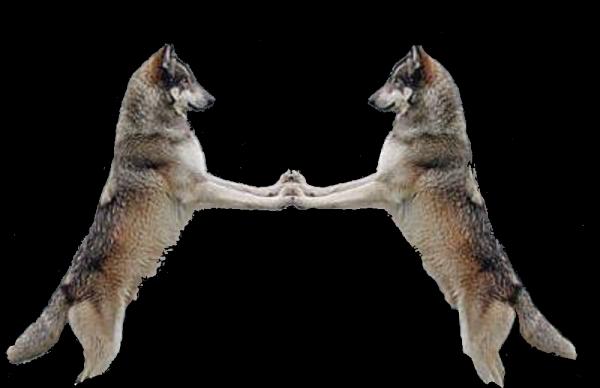le poing levé sauvons nos loups !!!!!