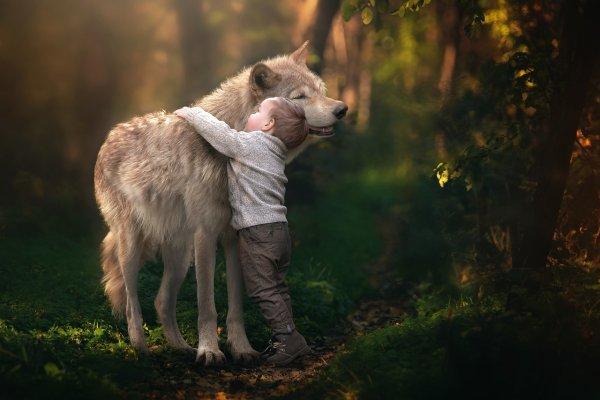 Le Loup vu par les enfants, Le loup n'effraie plus les enfants, il les fascine :