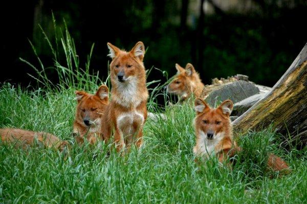 A quoi servent les animaux sauvages ?