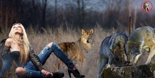 Comment le  loup communique :