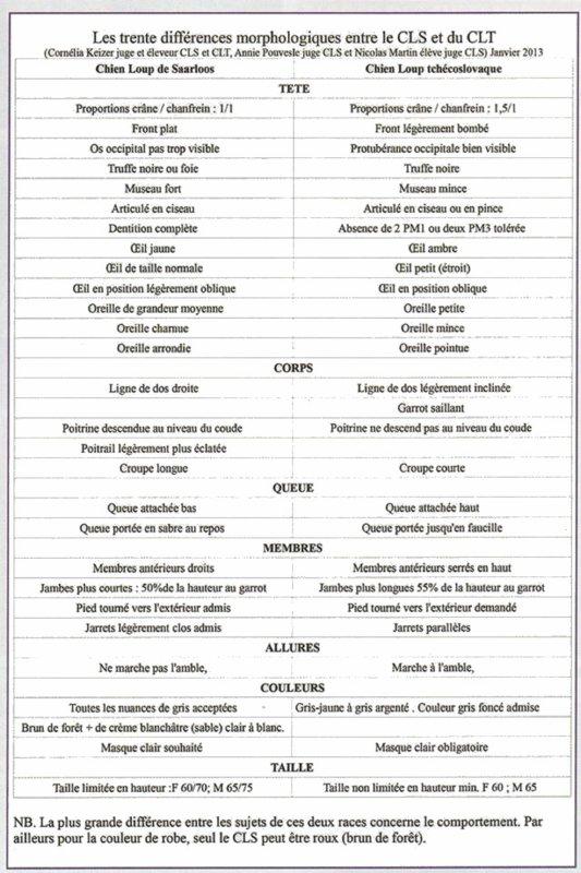 DIFFERENCES MORPHOLOGIQUES ENTRE LE LOUP ET LE CHIEN LOUP TCHECOSLOVAQUE