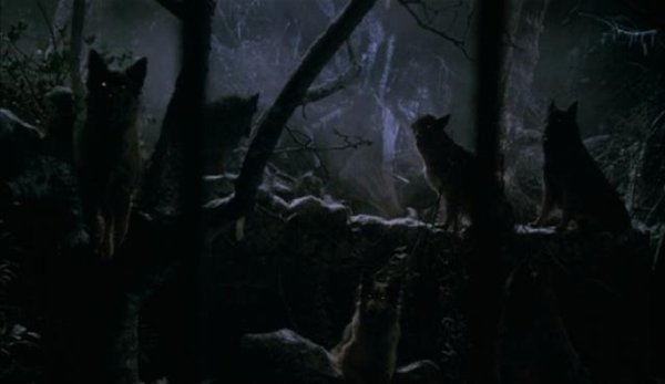Rêver de loup interprétations :