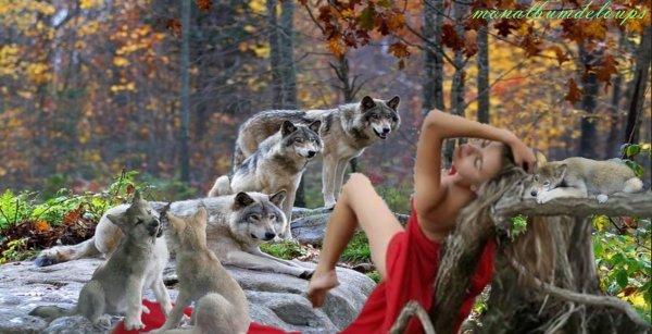 """La question de la """" réintroduction """" du loup"""