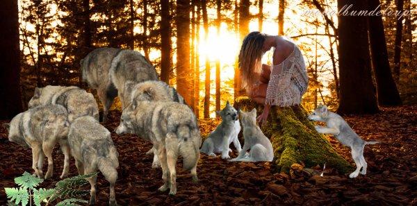 MORPHOLOGIE : Les pattes du loup