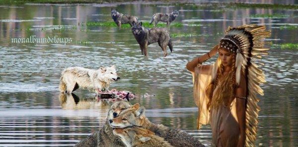 Important !!! à lire   Étude : tuer les loups ne sert à rien et aggrave les attaques. Explications…