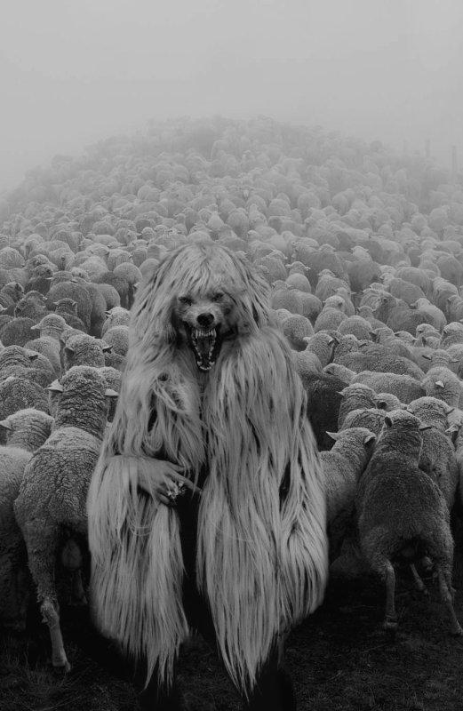 """Chaque loup est le symbole vivant de la biodiversité de la vie sur terre et de l'espoir. """""""
