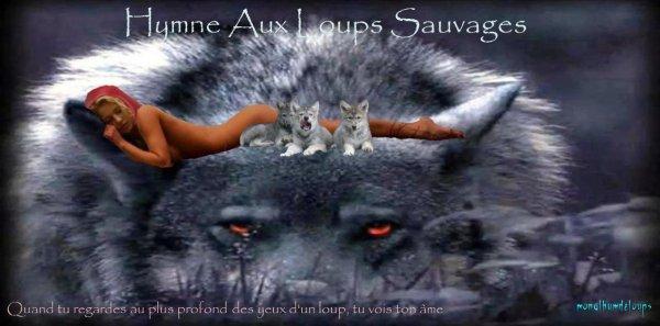 Quand les loups changent les rivières