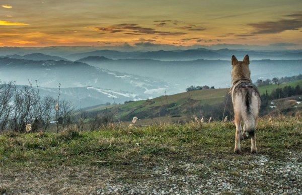 Sur les traces du loup des Vosges  Le période hivernale représente un moment propice pour le suivi scientifique du loup. La neige, quand elle est présente, permet de suivre des traces et de mieux comprendre les déplacements et l'adaptation du canidé au massif vosgien.