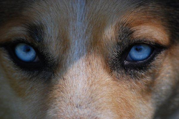 Une grande misère parmi les humains, c'est qu'ils savent si bien ce qui leur est dû et qu'ils sentent si peu ce qu'ils doivent aux ANIMAUX !!!!!