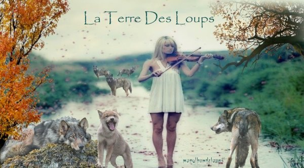Trois meutes de loups recensées en Haute-Loire