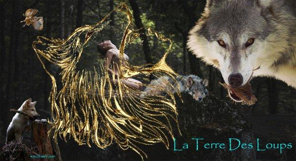 Caractéristiques physiques  Les sous-espèces du loup ont des morphologies et constitutions adaptées au climat et aux conditions générales de l'environnement dans lequel elles vivent. Nous présenterons ici les caractéristiques morphologiques moyennes de l'espèce en précisant les principales variations géographiques sous forme de tendances s'il y a lieu. Par ailleurs, nous détaillerons les principaux caractères morphologiques permettant de distinguer le loup du chien.