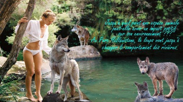 Jusqu'à quel point une espèce animale peut-elle avoir un impact positif sur son environnement ???