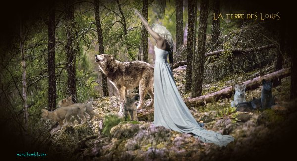 """"""" Comme le firent nos ancêtres il y a deux millions d'années, regardons les loups. Contemplons-les. Haïs parfois, traqués hélas, ils continuent dans l'absolue liberté de leurs courses et de leurs amours, à nous apprendre ce sens qui se dérobe à nous, qui nous échappe, qui nous effraie et que nous entendons pourtant, certaines nuits de lune, quand ils hurlent sous le ciel : le paradis est ici, là où ils sont""""."""