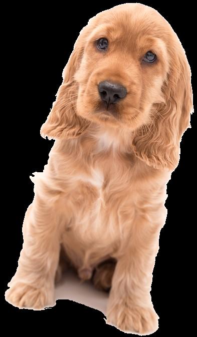 Un commerce véreux sur le dos de chiens (malades).............