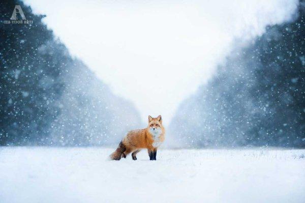 Neige, froid, vent, pluie… Comment les animaux résistent-ils aux conditions météorologiques extrêmes ??? Comment les aider ???