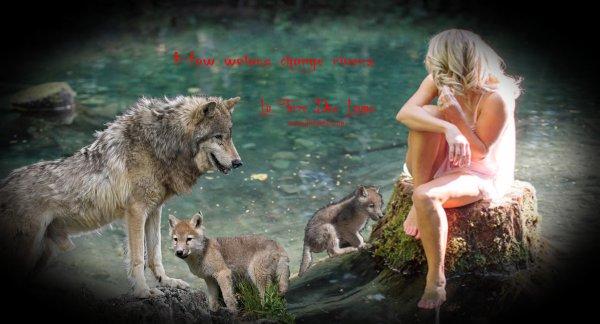 Nature : le loup, ce méconnu !!!