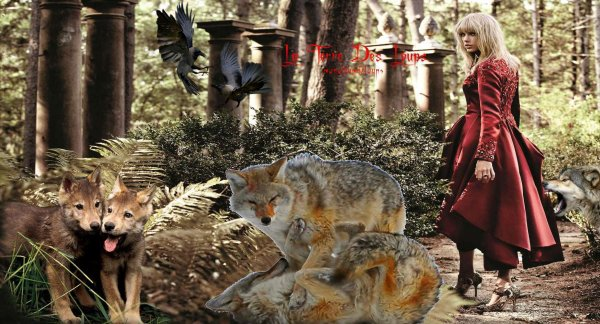 LE loup a modifié ses habitudes et il préfére aujourd'hui chasser au crépuscule ou à l'aube afin d'éviter tout contact avec l'humain...