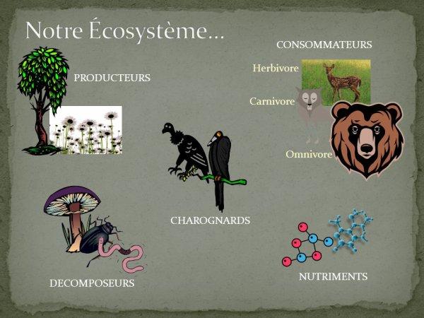 L'équilibre d'un écosystème