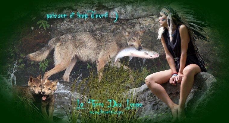 « Les loups, nos voisins » : documentaire sublime qui nous dévoile la vie de Léo et sa meute....