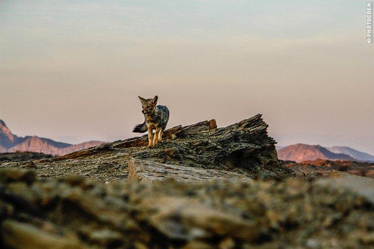 Une créature mystérieuse ressemblant à un loup tuée au Montana :'( ...