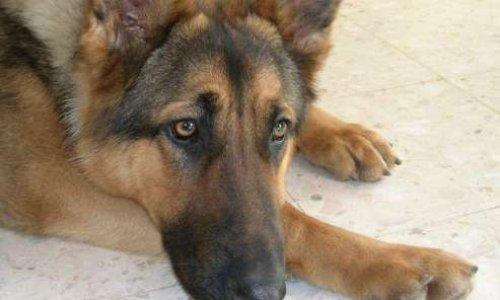 Un chien retrouvé calciné près des dunes d'Écault.... signez la pétition merçi pour nos sans voix de plus en plus victimes d'actes de cruauté ...
