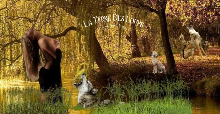 Les stragégies de chasse des loups ...  Au cours de la traque, les loups pistent la proie à ses différentes odeurs, empreintes, urine et excréments, mais aussi poils, particules de peau ou parasites...