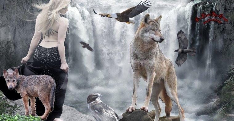 D'où viennent les loups du parc à loups du Gévaudan ???