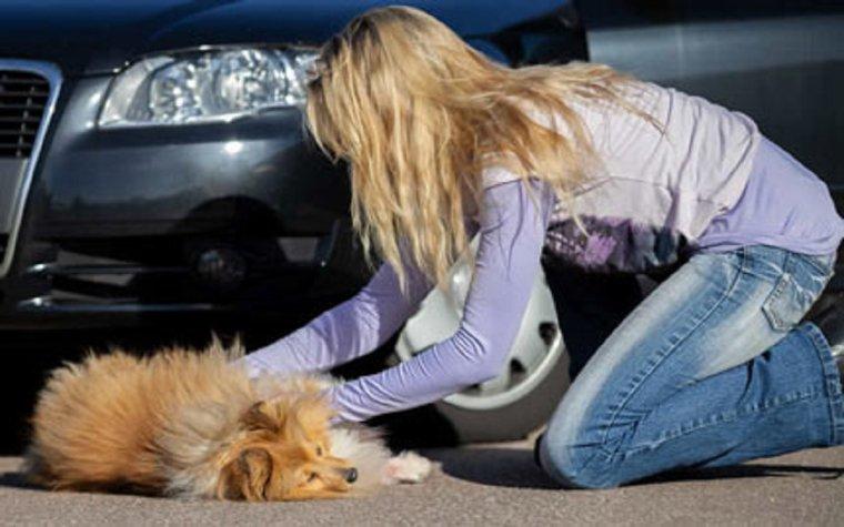 Apprendre les gestes de premiers secours pour sauver son chien ou son chat  FORMATION Cette pratique se répand de plus en plus en France…