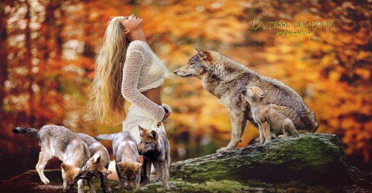 rencontrer et toucher des loups... Un parc à loups ouvert au public et leur chien, entrée gratuite